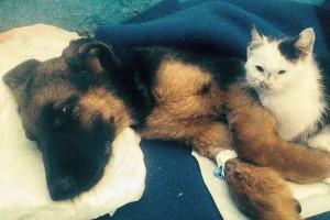 Как винничанин боролся за жизнь щеночка с прокушенной головой, который ослеп и впал в кому, фото-2