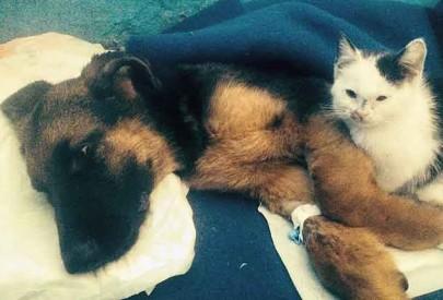 Как винничанин боролся за жизнь щеночка с прокушенной головой, который ослеп и впал в кому
