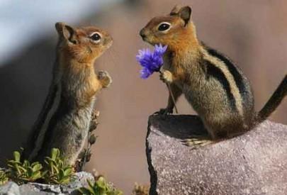Животные тоже умеют дарить цветы