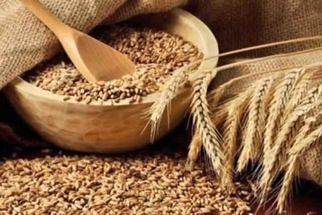 Урожай зерновых вБелгородской области превысил 3 млн тонн
