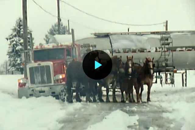 koni-sneg