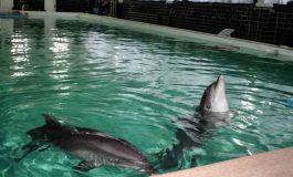 На Винничине 5 дельфинов стали заложниками интриг и амбиций (видео)