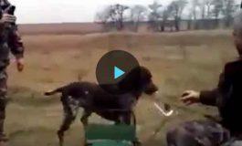 Собака по просьбе своего хозяина сбегала за водкой (видео)