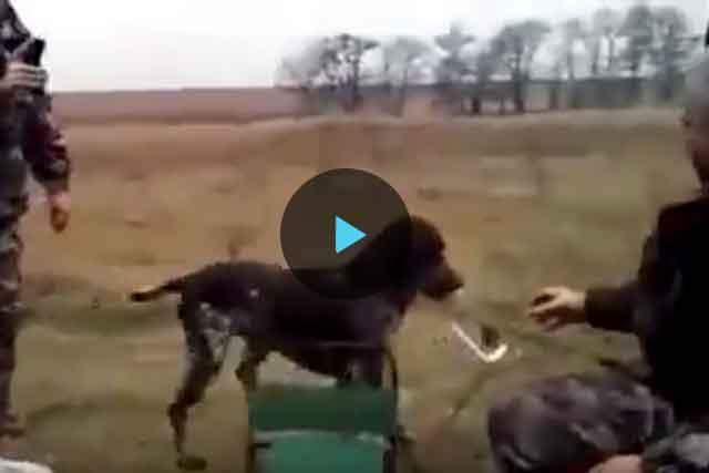 sobaka-vodka-video