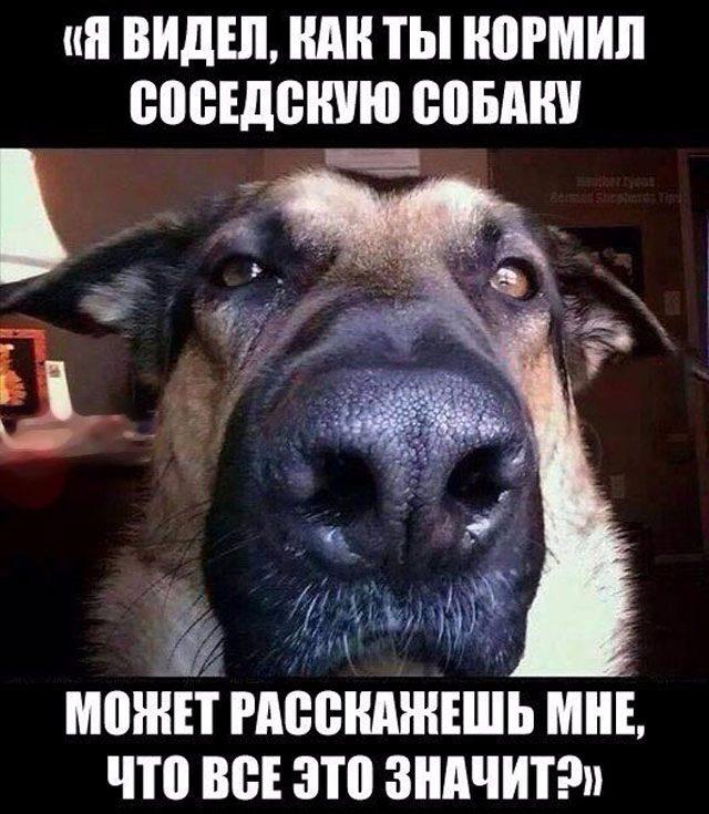 Анекдот Про Собаку Которая Говорит Видео