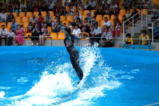 ВДонецке сгорело сооружение неработающего дельфинария