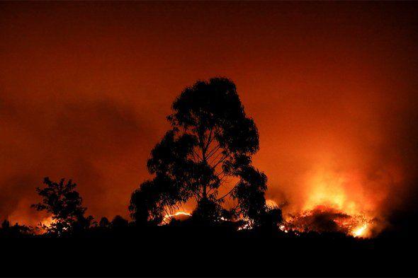 Практически 20 человек погибли из-за лесных пожаров вПортугалии