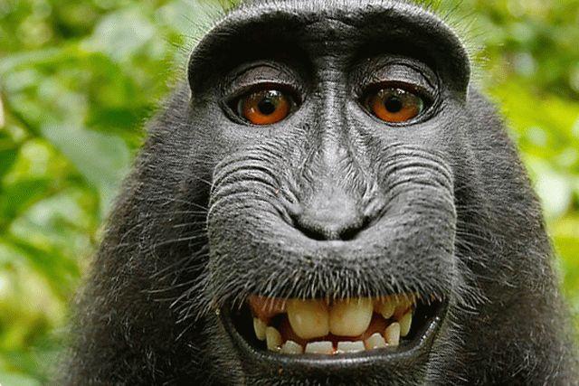 Bbc секс обезьяны видео