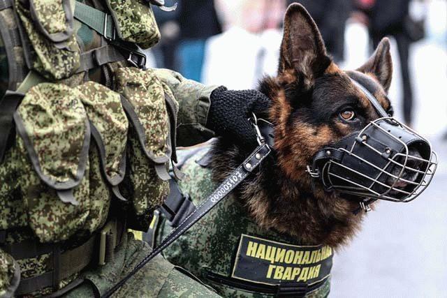 Что сегодня минируют в Петербурге. Новости. Фото