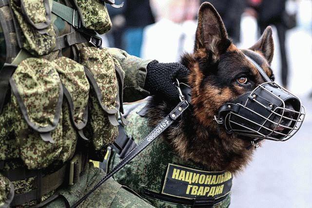 «ОВД-Инфо» сообщило озадержании 330 человек повсей Российской Федерации