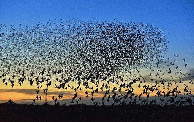 Над таинственной смертью 5-ти тыс. диких птиц вХерсонской области думают специалисты