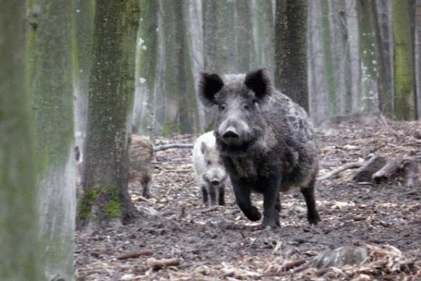 На Винничине подсчитали оленей, волков и других охотничьих животных, фото-1