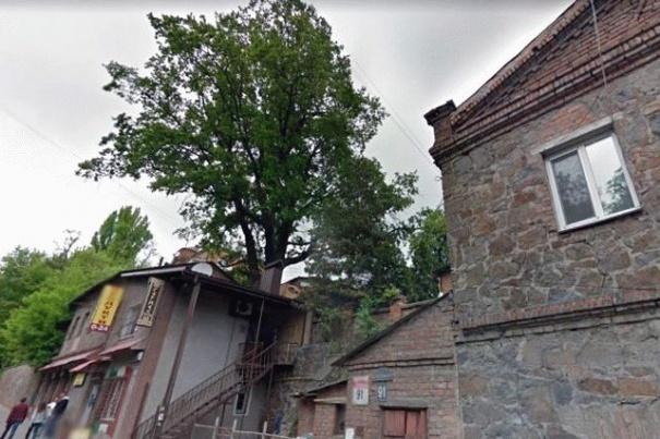 В Виннице городские власти дали статус памятника дубу Гаврило, фото-1